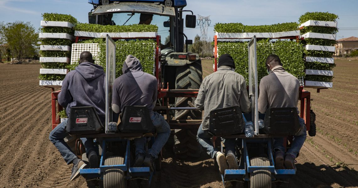 Italy, Casal di Principe (CE), April 16th, 2020 - The consequences of coronavirus on the city's daily life during lockdown.   Migrant working on a tractor with separating barriers for prevention.
